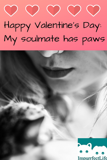 valentines day soulmate paws #valentinesday #soulmate #paws #impurrfectlife